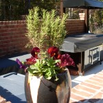Seasonal Container on a pool patio and outdoor cooking area