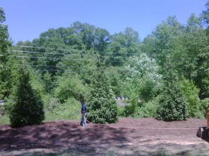 Green Giants Landscaping